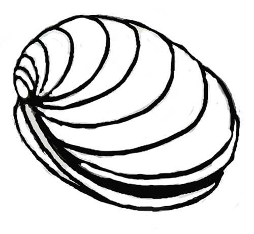 How to draw Clam